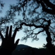 A solstice message from ancient roots